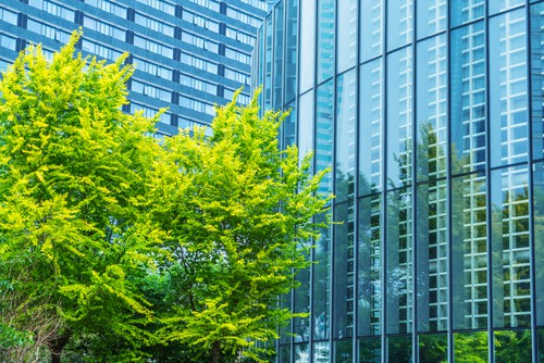 Large glass office buildings with leafy green tree outside